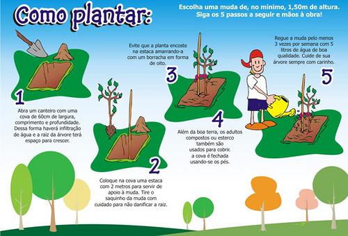 img_como_plantar_arvore